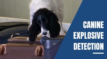 Canine Explosive Detection Teams